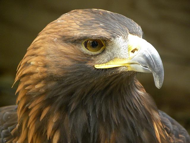 齊藤慶輔(さいとうけいすけ)猛禽・野生動物の獣医士のプロフィールや経歴は?:SWITCHインタビュー