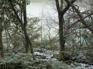九大の森冬景色